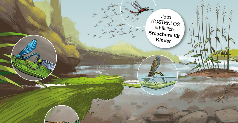 Slider Insekten Kinder